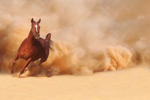 dust, horse, running, runs, sand, horse