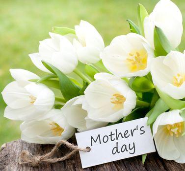 цветы, праздник, открытка, белые тюльпаны