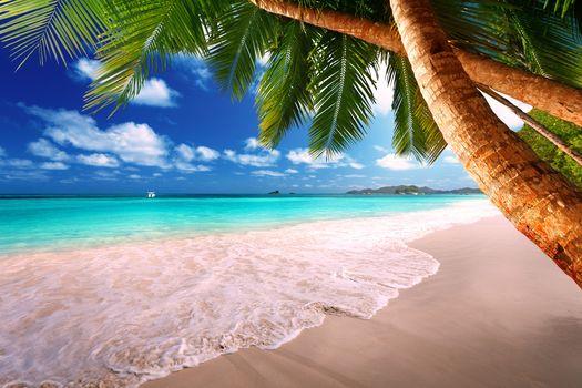 sand, ocean, shore, island, sun, Palms, tropics, sea, beach