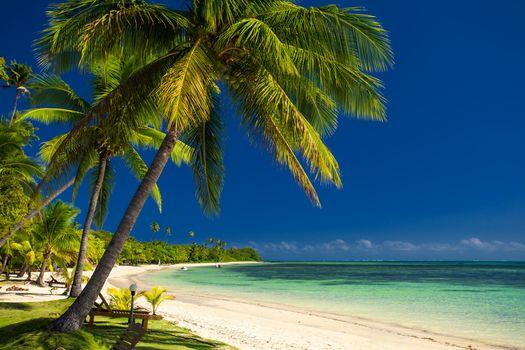 coast, sea, Boat, Palms, Coast, sea, boats, palm trees