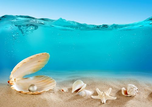 море, дно, океан, песок, ракушки