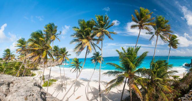 тропики, море, песок, пальмы, солнце, океан, берег, остров, пляж