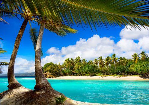 пальмы, море, тропики, пляж