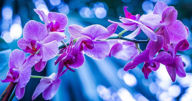 ORCHIDS, Flowers, flora