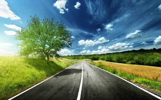 road, field, trees, landscape