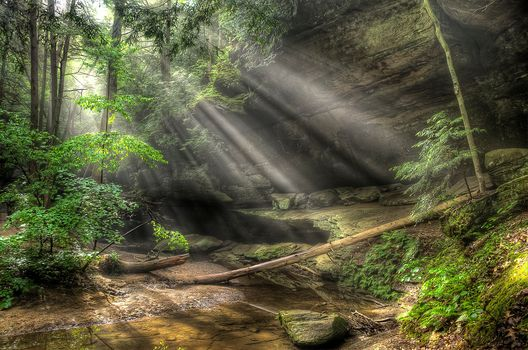 forest, trees, Rocks, stones, small river, creek, Rays, nature
