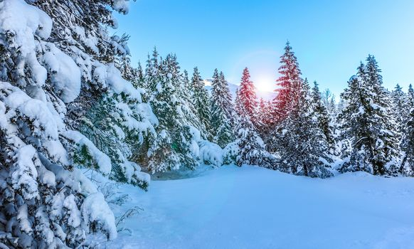 forest, winter, spruce, trees, snow, nature