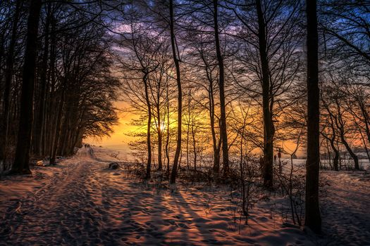 winter, sunset, forest, trees, road, sun, snow, sunset walk, landscape