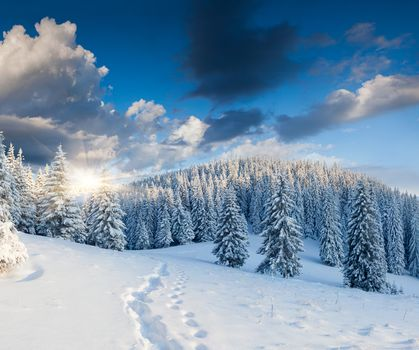 winter, forest, trees, snow, traces, rise, nature, landscape