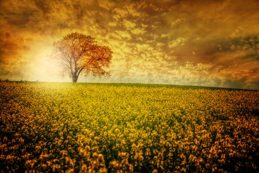 sunset, field, tree, Flowers, landscape