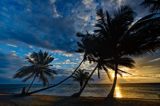 sunset, sea, shore, Palms, landscape