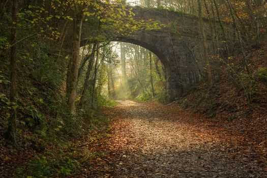 forest, arch, bridge, road, foliage, autumn