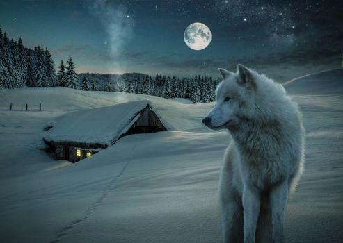 3d, little house, snow, Wolf, moon, night