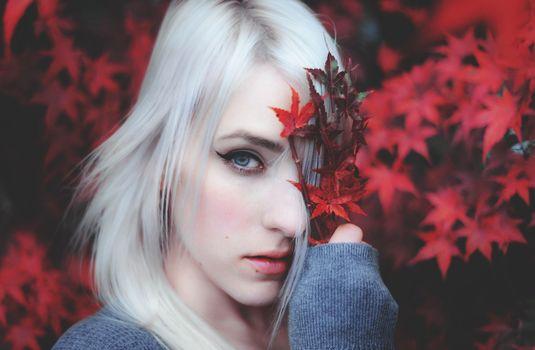 блондинка, взгляд, лицо, портрет, клён, листья, настроение