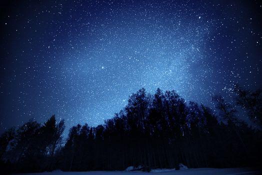 Небо, звёзды, ночь, деревья, лес, природа
