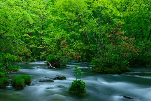 Forest River, trees, nature