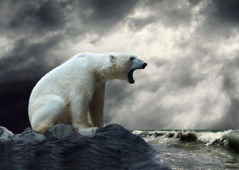 белый медведь, полярный медведь, животные