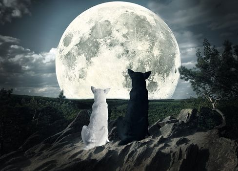 moon, dogs, looking, sky, night