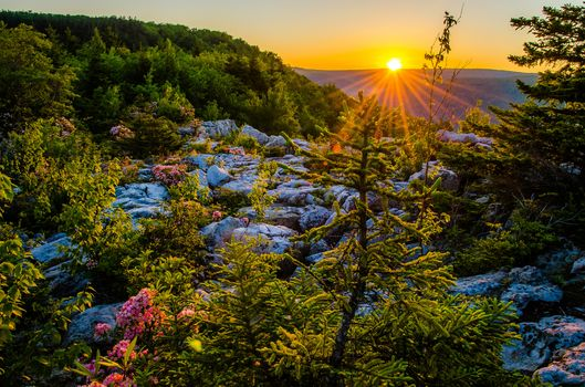 Dolly Sods Wilderness, Monongahela National Forest, Allegheny Mountains, West Virginia, Monongahela National Forest, Allegheny Mountains, Allegan, West Virginia, sunset, plateau