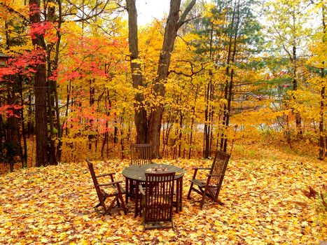 autumn, trees, Desk chairs, landscape