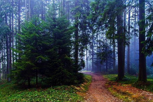 forest, trees, fog, road, landscape