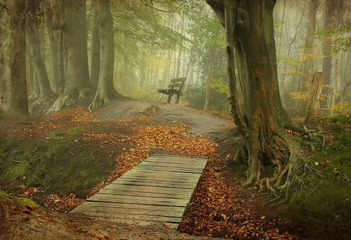 autumn, forest, trees, road, A bench, bridge, fog, landscape