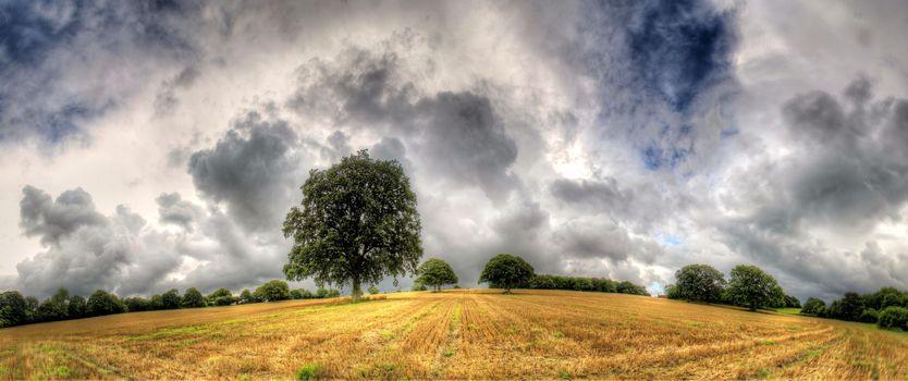 поле, деревья, тучи, пейзаж