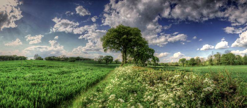 поле, тропинка, деревья, пейзаж