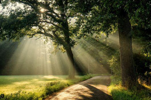 park, road, trees, sun, landscape