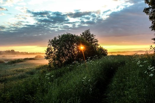 morning, sunrise, summer, Pushkin Hills, Russia, DAWN, fog, grass, sky, clouds, trees, bush, nature, landscape