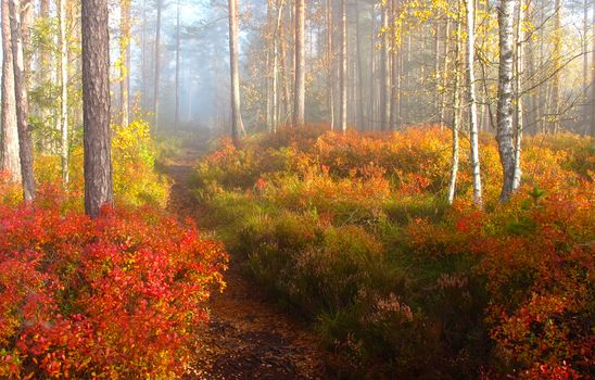 autumn, forest, trees, footpath, nature, fog