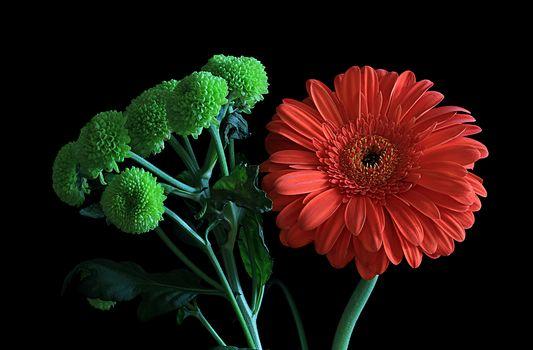 Flowers, gerberas, flora, Macro