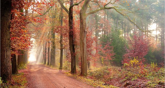 autumn, road, trees, landscape