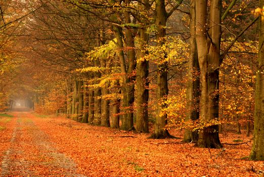 autumn, trees, road, landscape