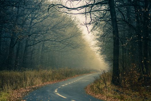 autumn, road, trees, fog, landscape