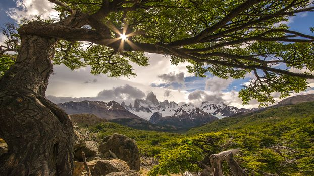 Дерево, Фиц-Рой, Аргентина, горы, пейзаж