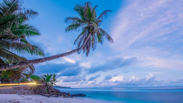 sea, shore, Palms, beach, landscape