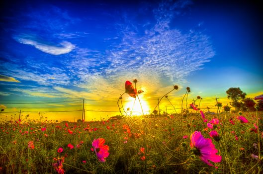 sunset, field, sky, Flowers, landscape