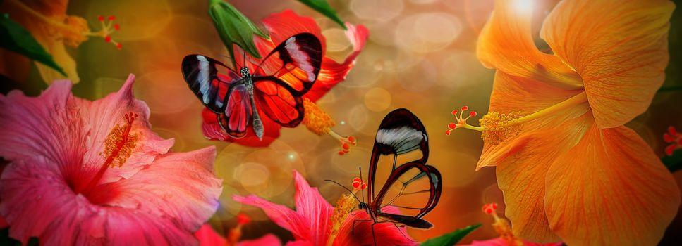 hibiscus, Butterflies, Photoshop