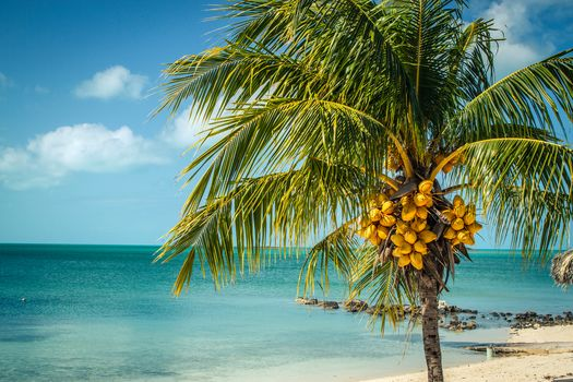 Long Island, Bahamas, sea, palm, landscape