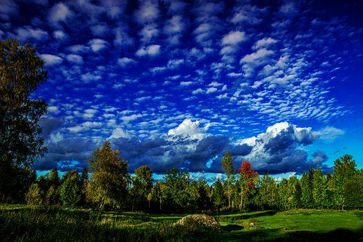 field, trees, sky, clouds, landscape