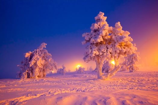 winter, Lapland, Nature Snow, winter, trees, landscape
