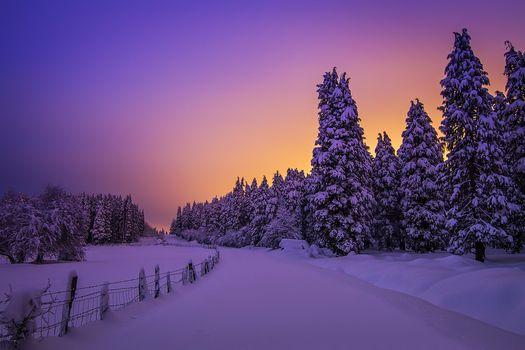 Snowy Night Lights, Otzarreta Forest, Basque Country, Spain