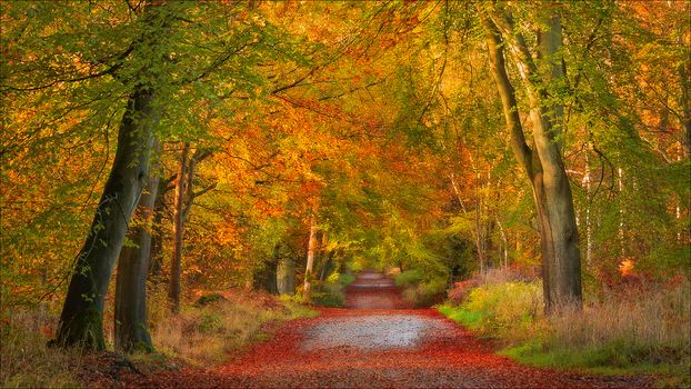 Savernake Forest, Wiltshire, england, Wiltshire, England, autumn, forest, road, trees