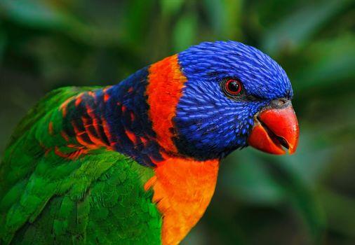 essay on parrot bird in marathi