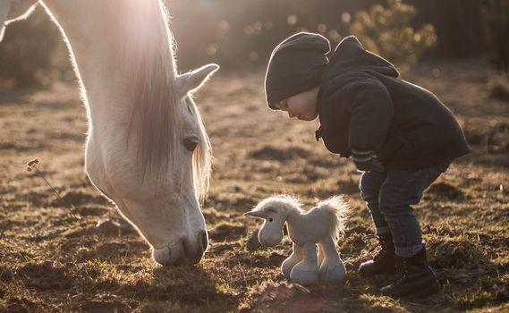 boy, horse, horse, toy, horse
