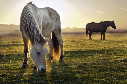 horse, Horses, horse, horse, stallion, horses, animals