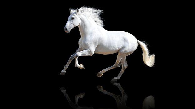животные, кони, лошади, конь, лошадь, черный фон