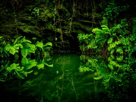 Pescadero Creek Ferns, In Portola Redwoods State Park, California, USA