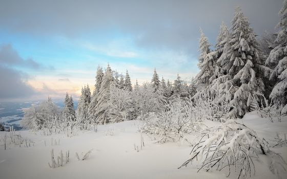 Proeller Peak, St Englmar, Bavarian Forest, Germany, forest, trees, winter, snow, drifts, landscape